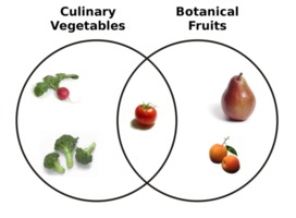 """A Venn diagram shows the overlap in the terminology of """"vegetables"""" in a culinary sense and """"fruits"""" in the botanical sense."""